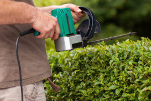 A Men trims the high hedges with an electric hedges trimmer.